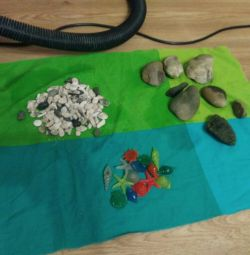 Stones and fluorescent shells, shell from the sea