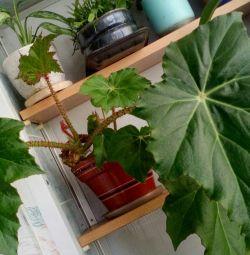 Комнатные растения(не дорого)