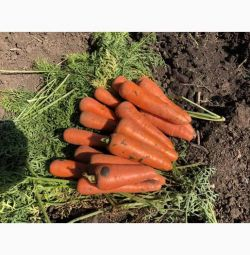 Carrots wholesale grade Abaka