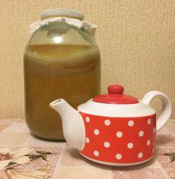 Tea mushroom