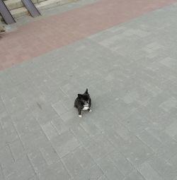 Örgü mini chihuahua
