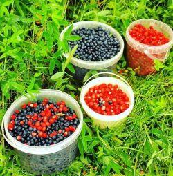 Comenzi pentru afine pădure și căpșuni