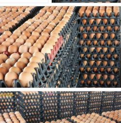 Freshly Packaged Chicken Eggs For Sale