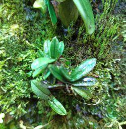 Φυτά Paludarium