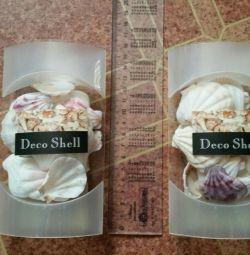 Seashelluri decorative