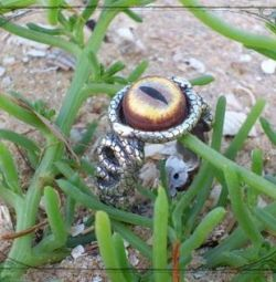 Ring with snakes and cobra's eye