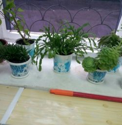 Indoor plants 6 pcs