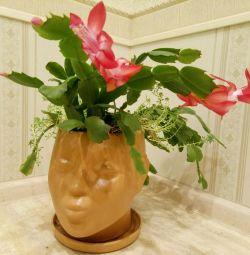 Квіти в оригінальних Кашпо