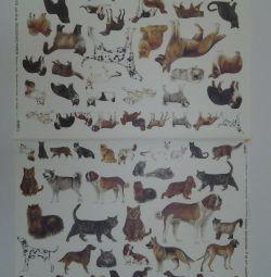 Carte de decoupage pe hârtie groasă. A2