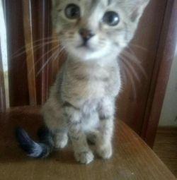 Kitty mousetrap