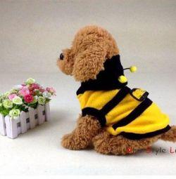 Bluze Bee