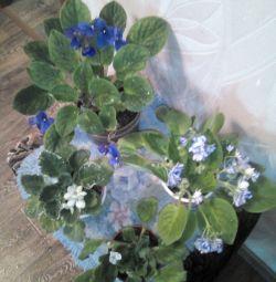 Odalar için çiçekler