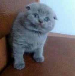 Plush cutest creature