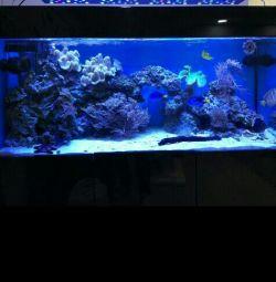 Aquarium 300 liters.