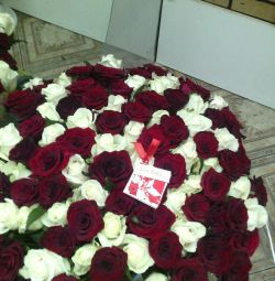 51, 101 trandafiri