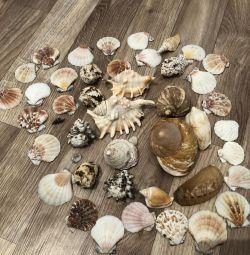 Seashells are decorative