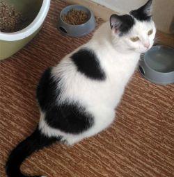 Kitty Snezhana