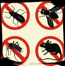 Exterminarea gandacilor, bug-urilor, rozatoarelor.