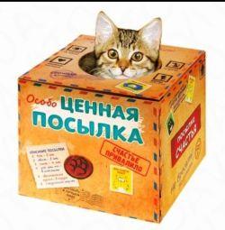 Γατάκι σε ένα κουτί δώρου