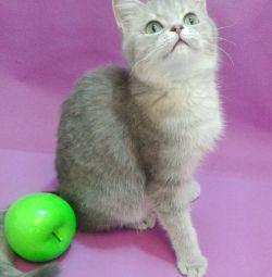 Kitty cu ochi de smarald