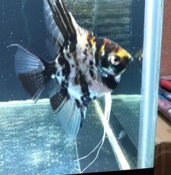 Аквариумные рыбки, растения,корма