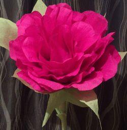 Creste floare uriasa
