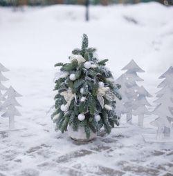 Χριστουγεννιάτικο δέντρο σε γλάστρες