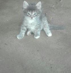 Kitten boy, 1 month.
