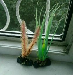 - two artificial plants (fluorescent)