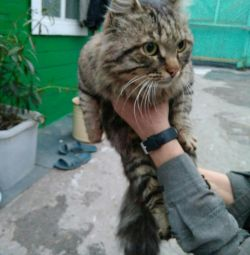 Cute cat, in good hands for free urgently