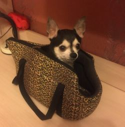Переноска/сумка для собак