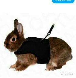Bir koşum, kobay / sıçan için bir yelek