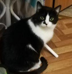 Cat 3 g