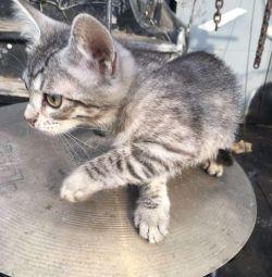 Котeнок в добрые руки❤