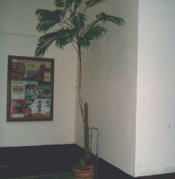 Пальма в глнянном горшке