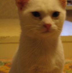 White kitten, girl