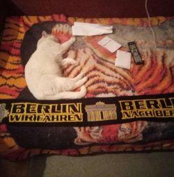 Berlin football scarf