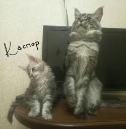 Kasper Kid