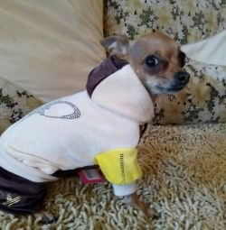 Costumul de câine velor