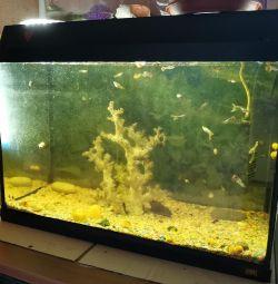 Aquarium 70l