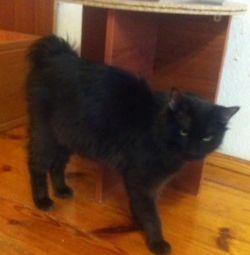 Самый чeрный кот для ваших недоброжелателей.