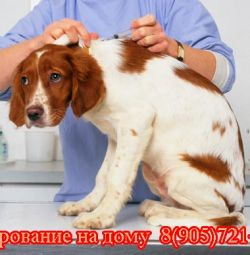 Chipping animals at home. Moscow and the region