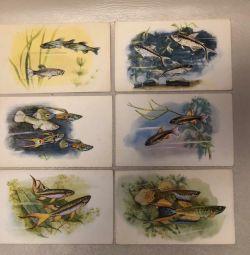 Набор открыток «Рыбки» 1968 год, 16 шт