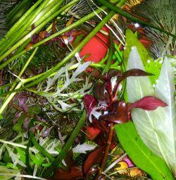 Podeaua din bazinul plantelor de acvariu