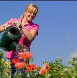 Υπηρεσίες κηπουρού