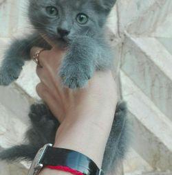 Kitten, 1 month.