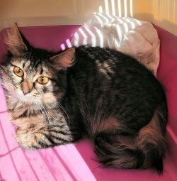 кішечка підліток