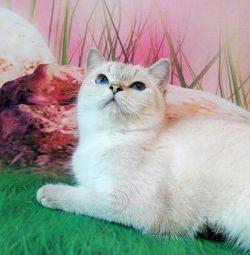 cat BRIny2533