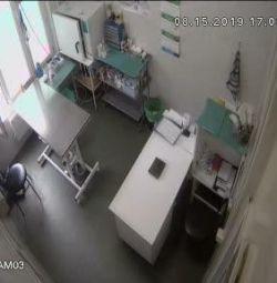 Veteriner asistanı