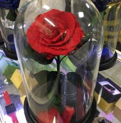 A beautiful stabilized rose in a flask costs 5 years